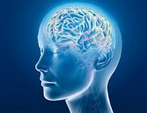 Neurociencia - Email Marketing